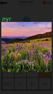 1100 слов на лугу растут цветы и видны холмы 24 уровень