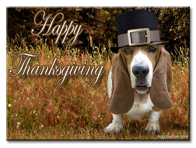 Bentley Basset Hound wishes you a Happy Thanksgiving