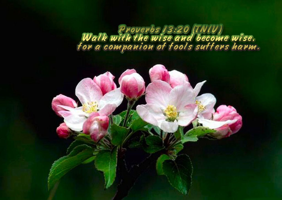 BIBLE VERSES: PROVERBS 13:20 |