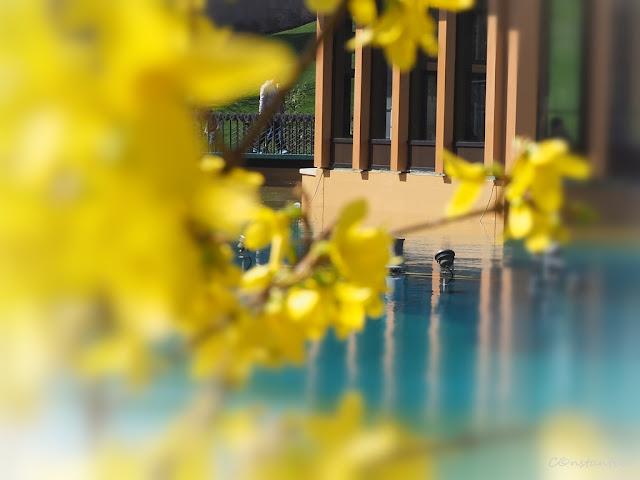 Fotografia printre flori - blog Foto-Ideea