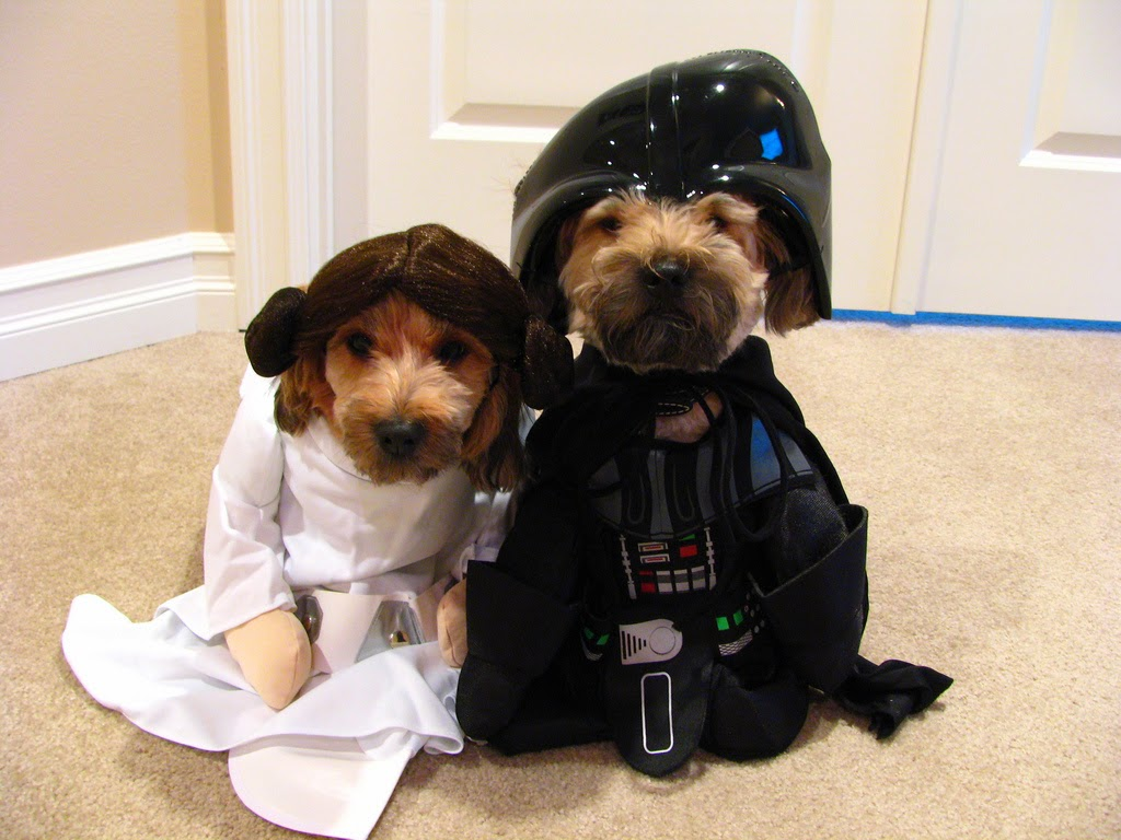 14 Best dog Halloween costumes of 2014