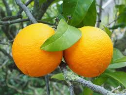 Inilah 5 Manfaat Vitamin C yang Jarang Diketahui Orang