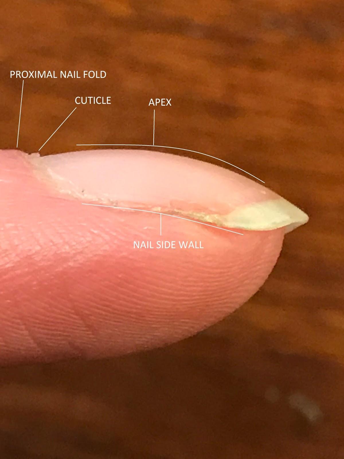 MadameRedd: Anatomy of a Nail + Basic Care