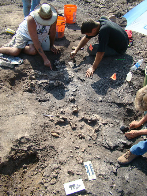 New prehistoric crocodile species identified