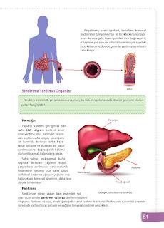 6. Sınıf Fen Bilimleri Ders Kitabı Cevapları Sevgi Yayınları Sayfa 51