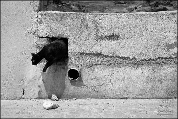 muro,gato