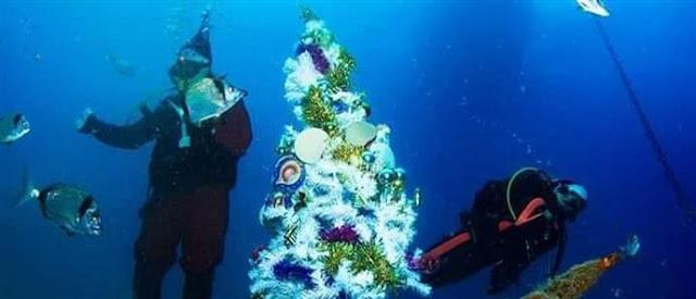 Υποβρύχιο χριστουγεννιάτικο δέντρο στόλισαν σε ναυάγιο στην Κύπρο (βίντεο)