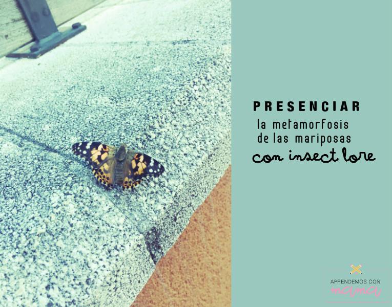 Presenciar la metamorfosis de las mariposas con Insect Lore ...