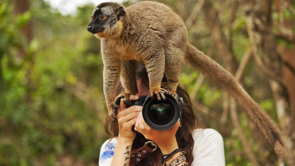 Fotógrafo animal