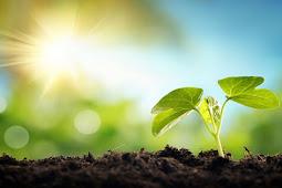 Bagaimana Cara Tumbuhan Mendapatkan Makanan dan Apa Makanannya?