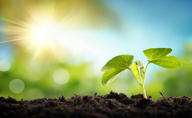 Bagaimana cara tumbuhan mendapatkan makanan
