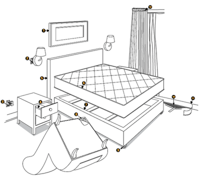 A Bed Bug: Diagram Of A Bed Bug