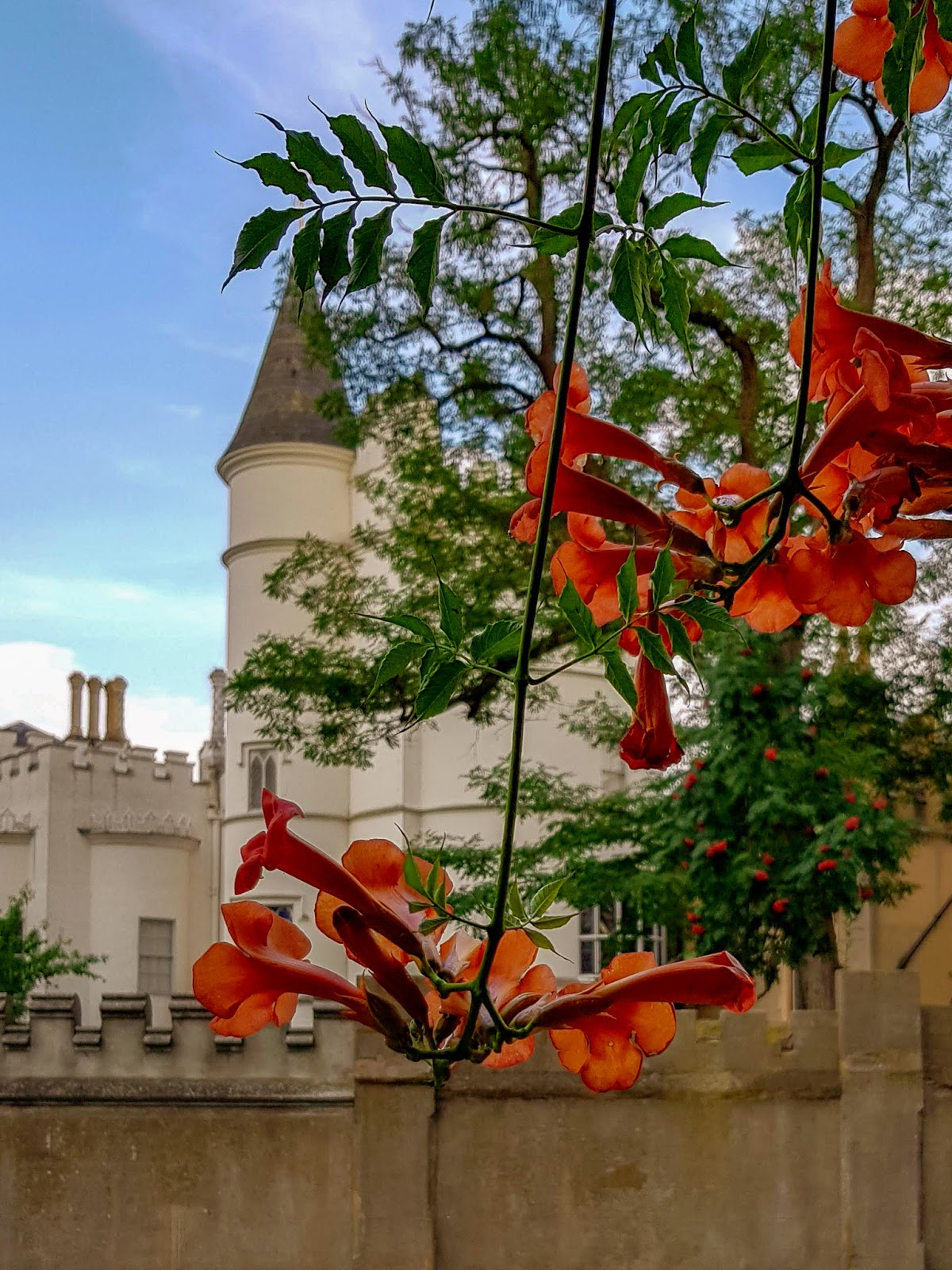 london days out   strawberry hill house and gardens