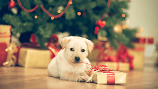 Christmas Present For Dogs - Christmas Gift Ideas For Your Dog