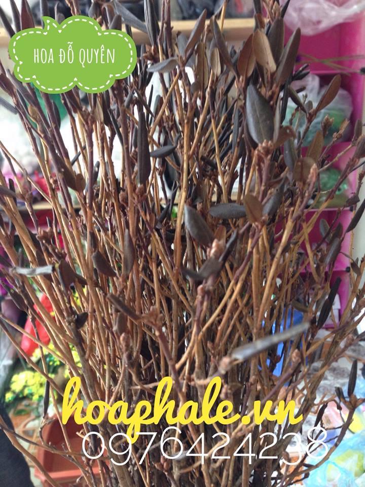 Hoa do quyen ngu dong o Thuong Tin