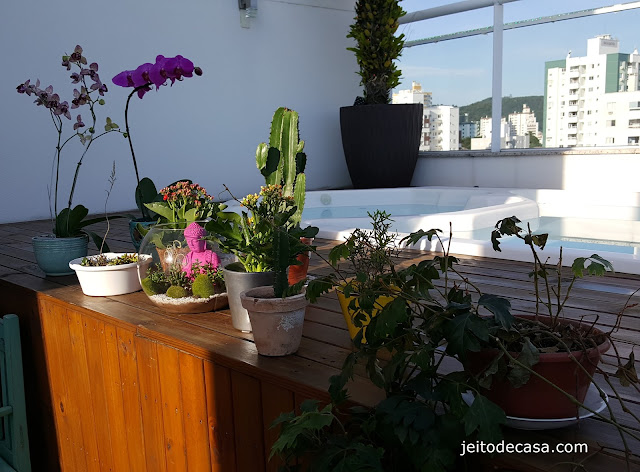 cuidados-com-plantas