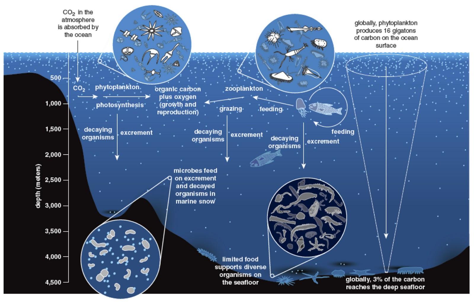 Mostly Open Ocean: Deep-sea Diversity