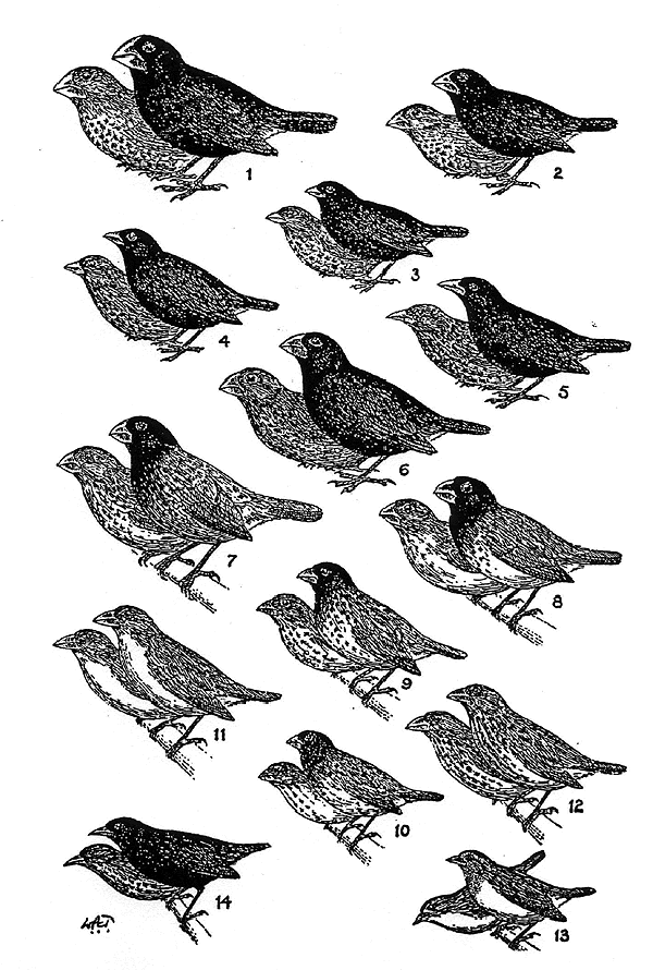 Let's keep it wild.: Darwin with the finches