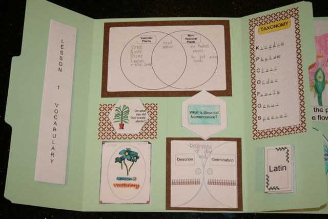 Shower Of Roses  Exploring Creation With Botany Lap Book