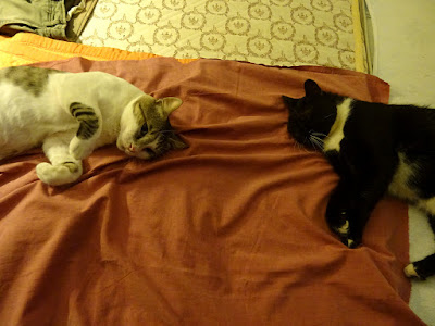 Ο Μάγκας και ο Πιέρ, δύο όμορφοι αραχτοί γάτοι