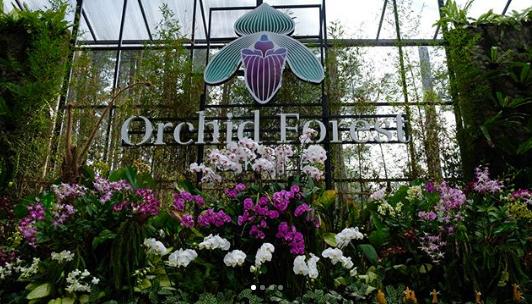 Orchid Forest Cikole - Wisata Anggrek Berwarna-warni dan Alam yang Asri