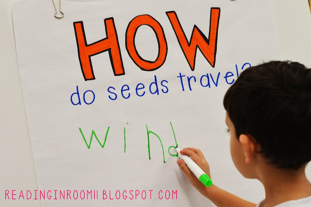 Check out this mentor text for kindergarten and first grade writing.  This post features Gail Gibbon's book From Seed to Plant and includes two free activities.