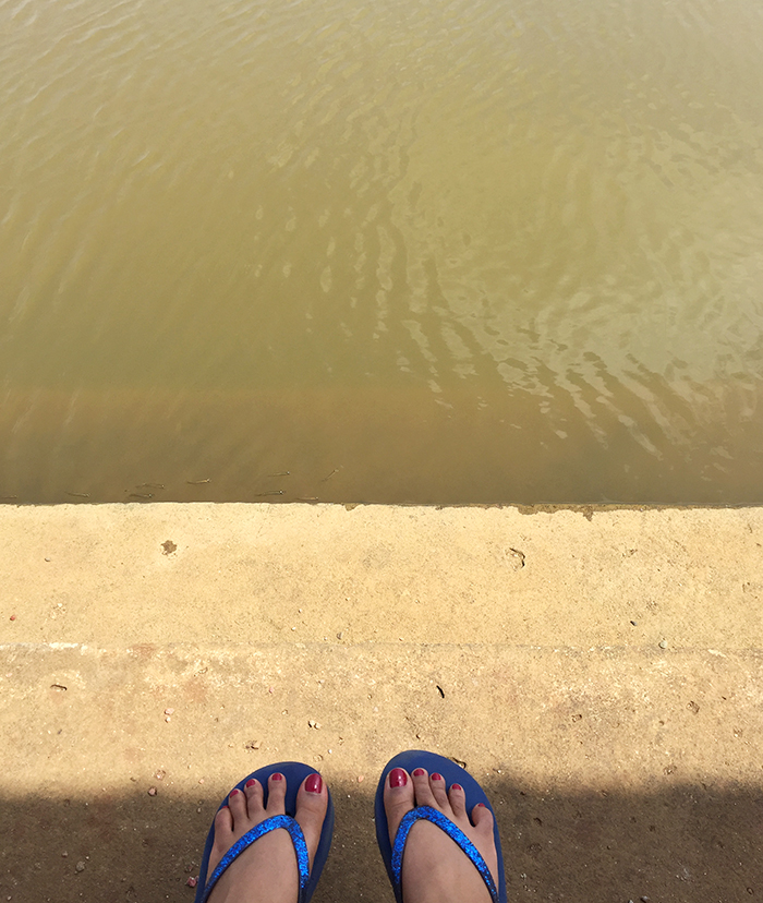 Image of a woman's feet besides a river with small fish swimming in Goa