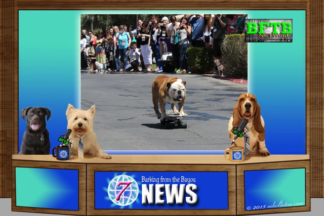 BFTB NETWoof News honors Tillman the skateboarding dog