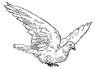bird dove flying image illustration clipart artwork drawing