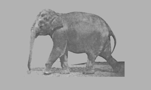 Gedichte Und Zitate Für Alle Gedichte Elefant
