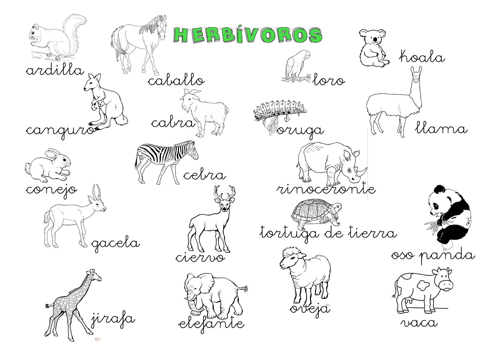 Qué Puedo Hacer Hoy Cartel Animales Herbívoros