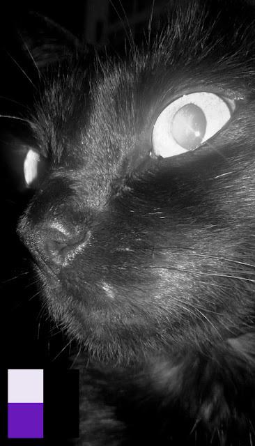 Rukia (Placcido)