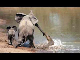 Cerita Fabel dan dongeng Pendek Si Buaya Dan Gajah