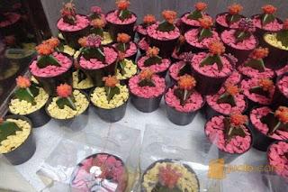 souvenir kaktus mini