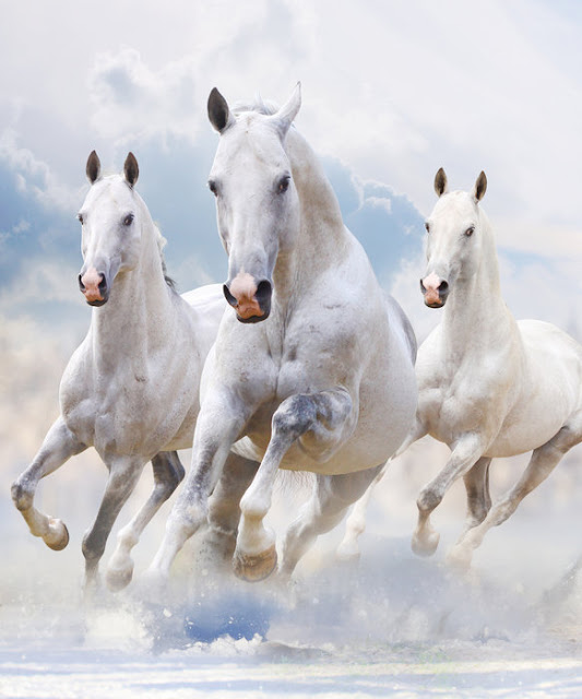 https://www.photowall.fi/sky-horses-tapetti