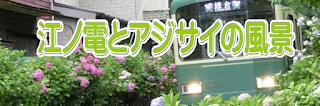 江ノ電とアジサイ風景