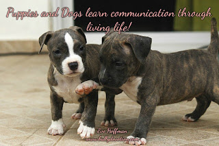 Puppies and Dogs learn communication through living life! All living life learns to communicate through trial and error, puppies and dogs are no exception.