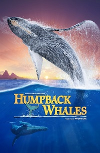 Watch Humpback Whales Online Free in HD