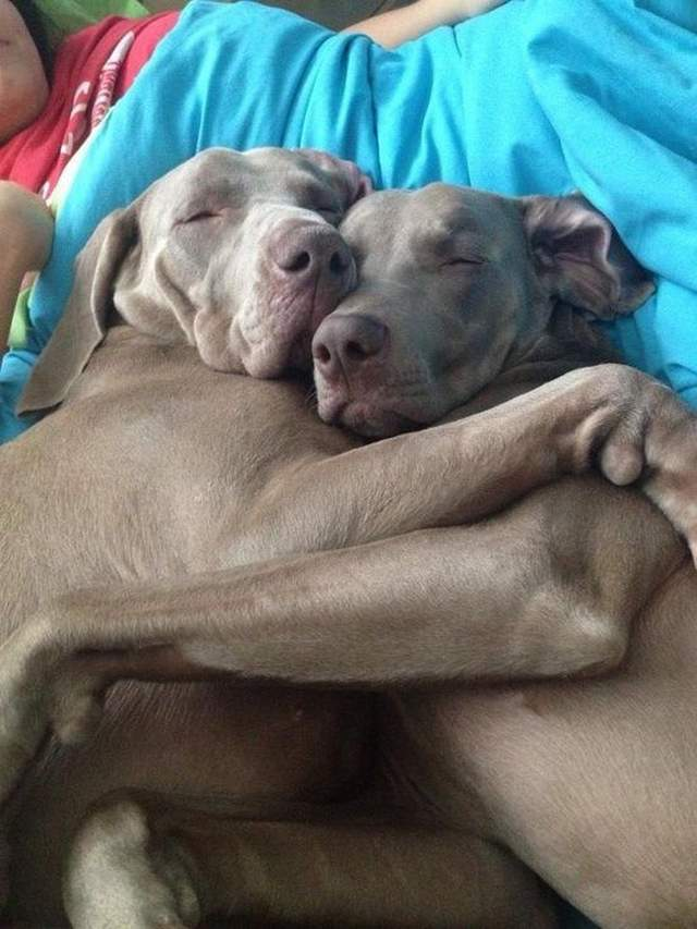 Cute dogs - part 158, dog photo, funny dog images