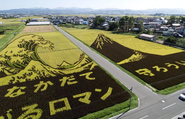 Pertanian Organik Di Jepang Luar Biasa  Pertanian Organik Di Jepang Luar Biasa