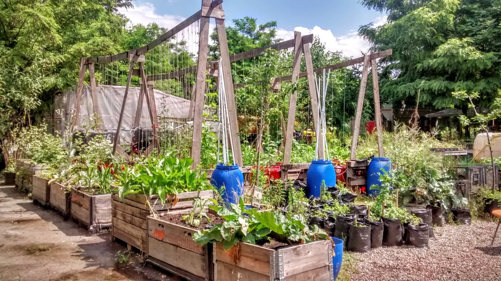 Image Result For What All Vegetables Can Be Grown In Pots