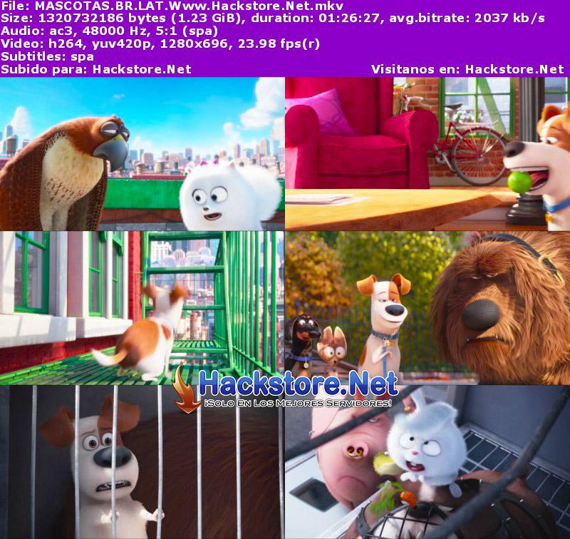 Capturas de La vida secreta de tus mascotas (2016) Blu-Ray RIP HD Latino + Subs