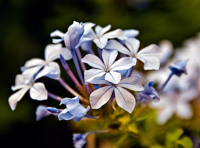 Muchas flores unidas en bouquet