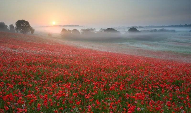 foggy-scenery-photo-01