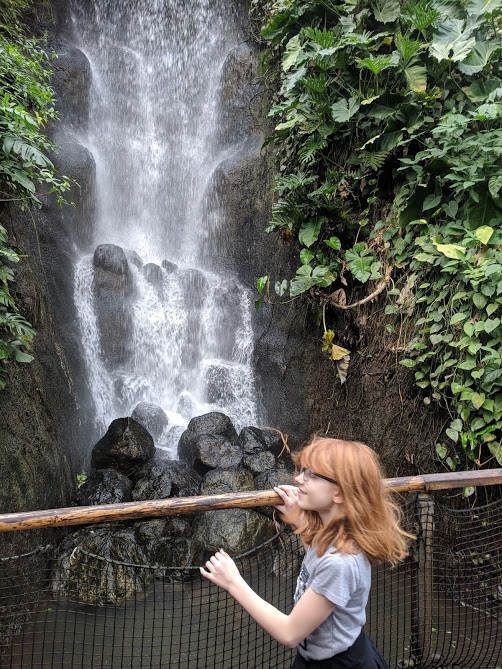10 Reasons to Visit the Eden Project in Winter  - waterfall in tropical biome