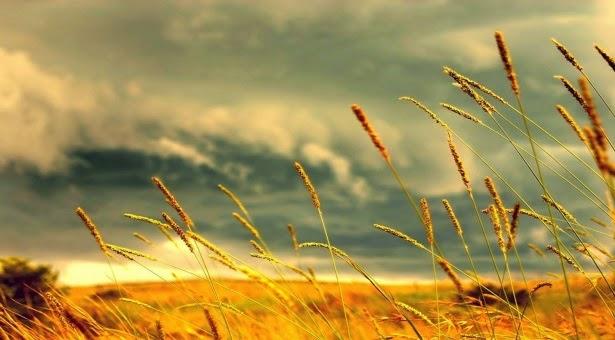 Αλωνάρτς - Η παράδοση κατά τον μήνα Αύγουστο στον Πόντο