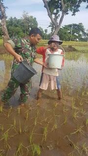 Babinsa Desa Karang Menggah Bantu Tani Pemupukan Padi