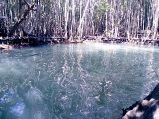 Cenotes Yucatan Corchito Progreso