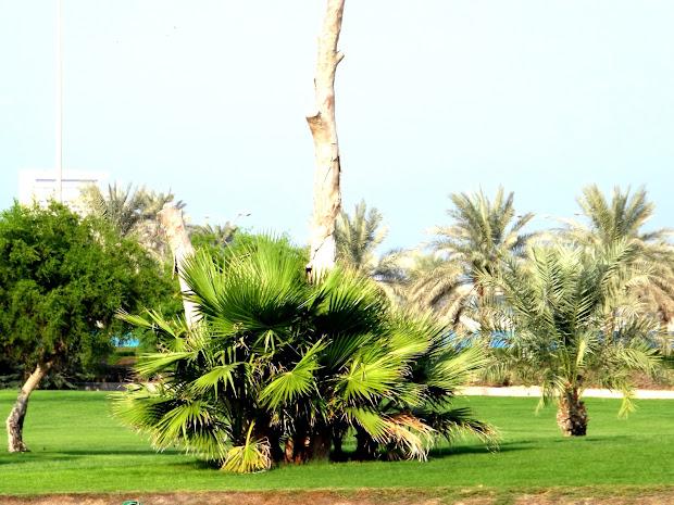 Al Bida Park - Parks In Doha Gazzan