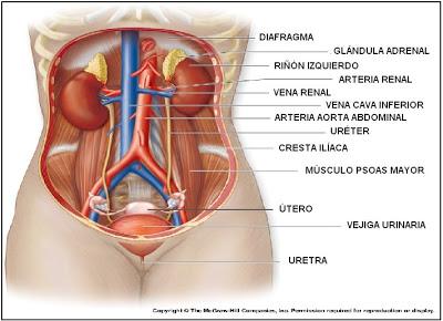 Piedra de la vejiga de la presión arterial